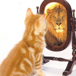lion in mirror